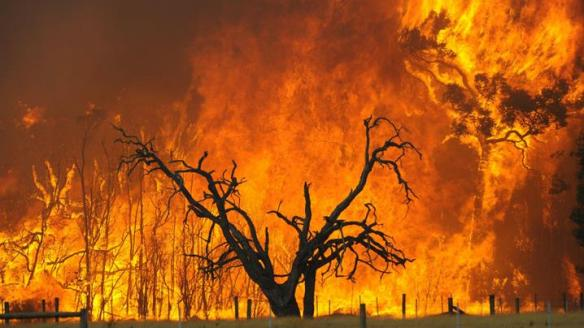 Bush Fire in Melbourne Hellish warmth