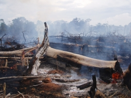 Amazon forests burning